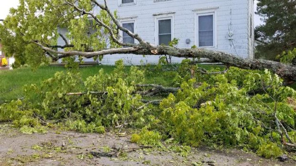Downed tree on Sweeney Road in Constableville