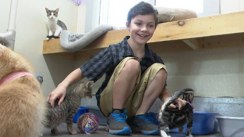 Kayden Kraeger pets cats at the Lewis County Humane Society