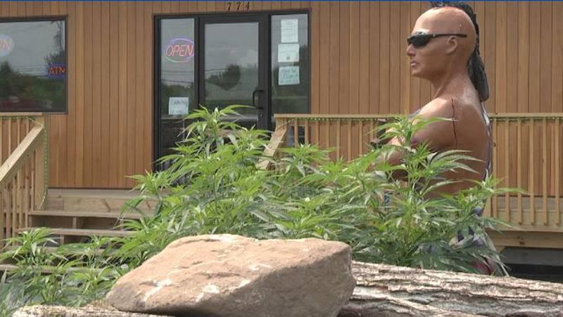 A St. Regis Mohawk tribal court tells the tribal government that recreational marijuana shops...