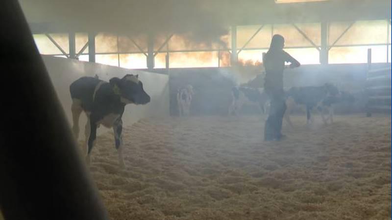 Barn fogging