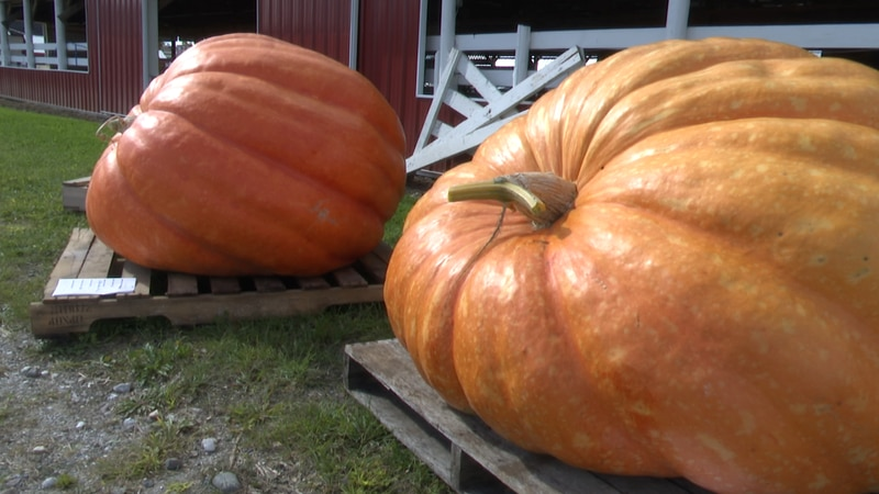 Pumpkins, a truckload of them. Some small, some enormous, others decorated. It was all part of...